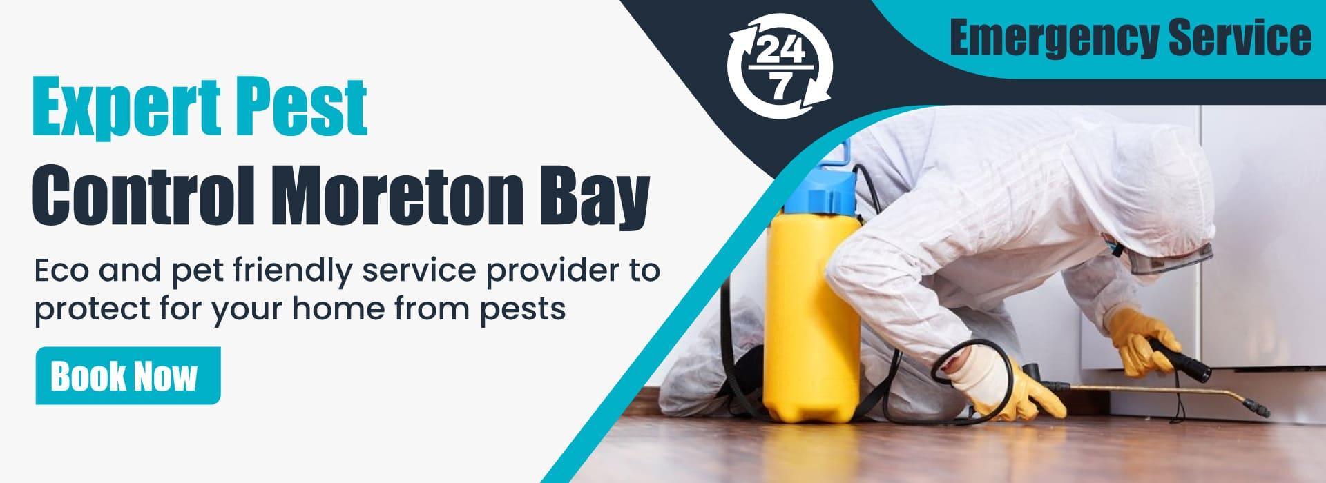 Pest Control Moreton Bay
